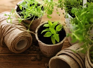 plantes médicinales hiver