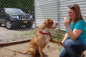 Renee Earl, a board member of the Regional Animal Shelter, shakes hands with Duke the dog on Saturday at the Regional Animal Shelter's annex building on West Fulton Street in Gloversville. The Leader-Herald/Jason Subik