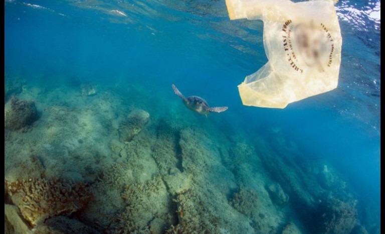 Proyecto de ley busca prohibir uso de bolsas plásticas en sectores costeros
