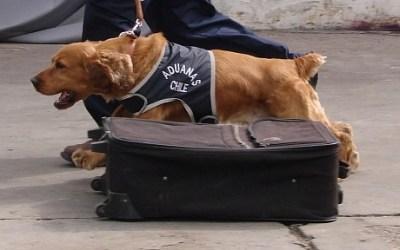 Agua Negra: un perro revisa los autos de los argentinos que cruzan a Chile