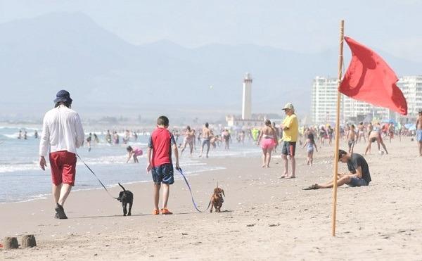 Con el perro a la playa: La Serena permite la presencia de mascotas