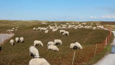 Photo of Schaapskudde weer in de Noordduinen