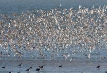 Photo of Roofvogels kijken op het Balgzand
