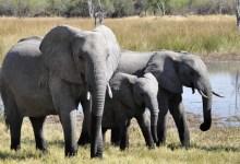 Photo of Geen olifanten naar Hoenderdaell
