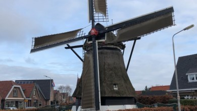 Photo of Houtrot in molen De Hoop (video)