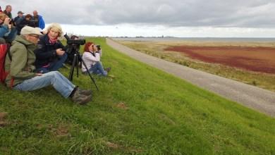 Photo of Excursie in vogelparadijs Balgzand