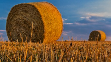 Photo of Ontheffing nodig voor hoge landbouwvoertuigen