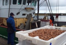 """Photo of Garnalenvissers varen niet meer uit: """"Geen handel meer door coronamaatregelen"""""""