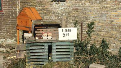 Photo of Stalletjes met streekproducten op Texel
