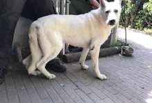 Photo of Dierenpolitie neemt hond in beslag
