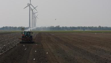 Photo of Hollands Kroon: gunstig gebied voor innovatieve agrarische sector