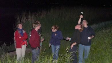 Photo of Avondexcursie in Wildrijk, op zoek naar vleermuizen
