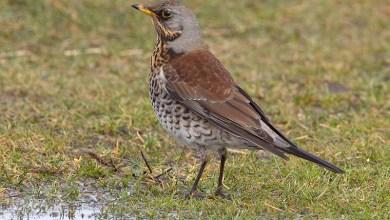 Photo of Een bijzonder fenomeen: de vogeltrek