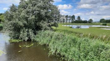 Rietkragen, water en grasland combineren samen een fijn uitzicht.