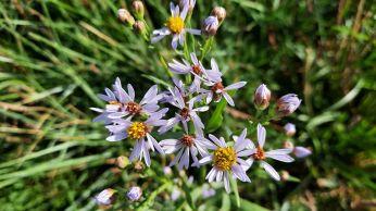 Schattige lichtpaarse bloemetjes langs de dijk