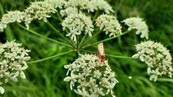 Kleine insecten en bloemen in overvloed