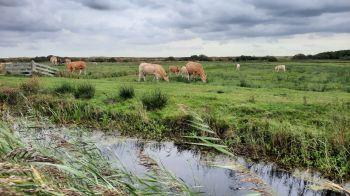 'Gelukkig zijn de koeien aan de andere kant van het hek'