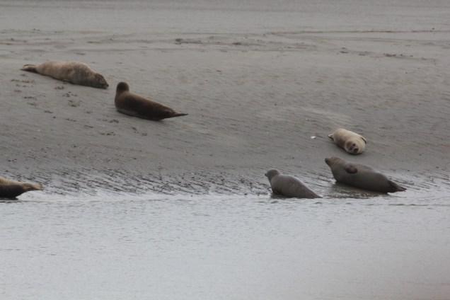 Photo du site phoques et cétacés de la côte d'Opale