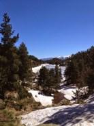 forêt de Llivia