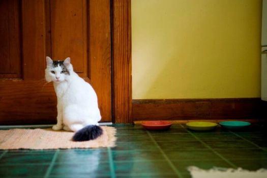 cat beside a door