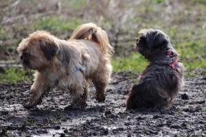 Hondenwandeling Beusebos