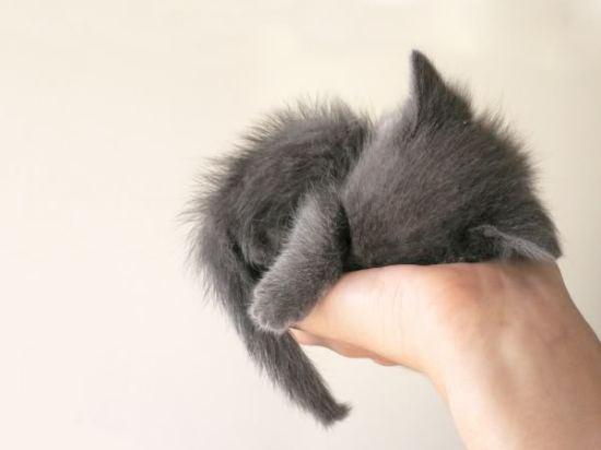 cuddle magic