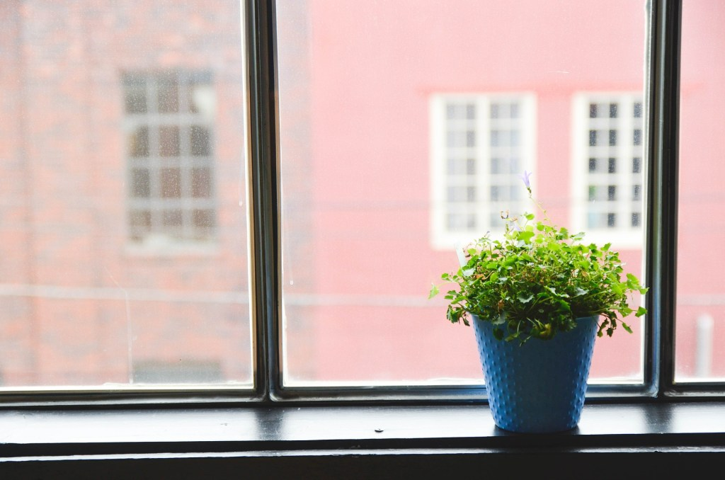 house plant in a pot on windowsill