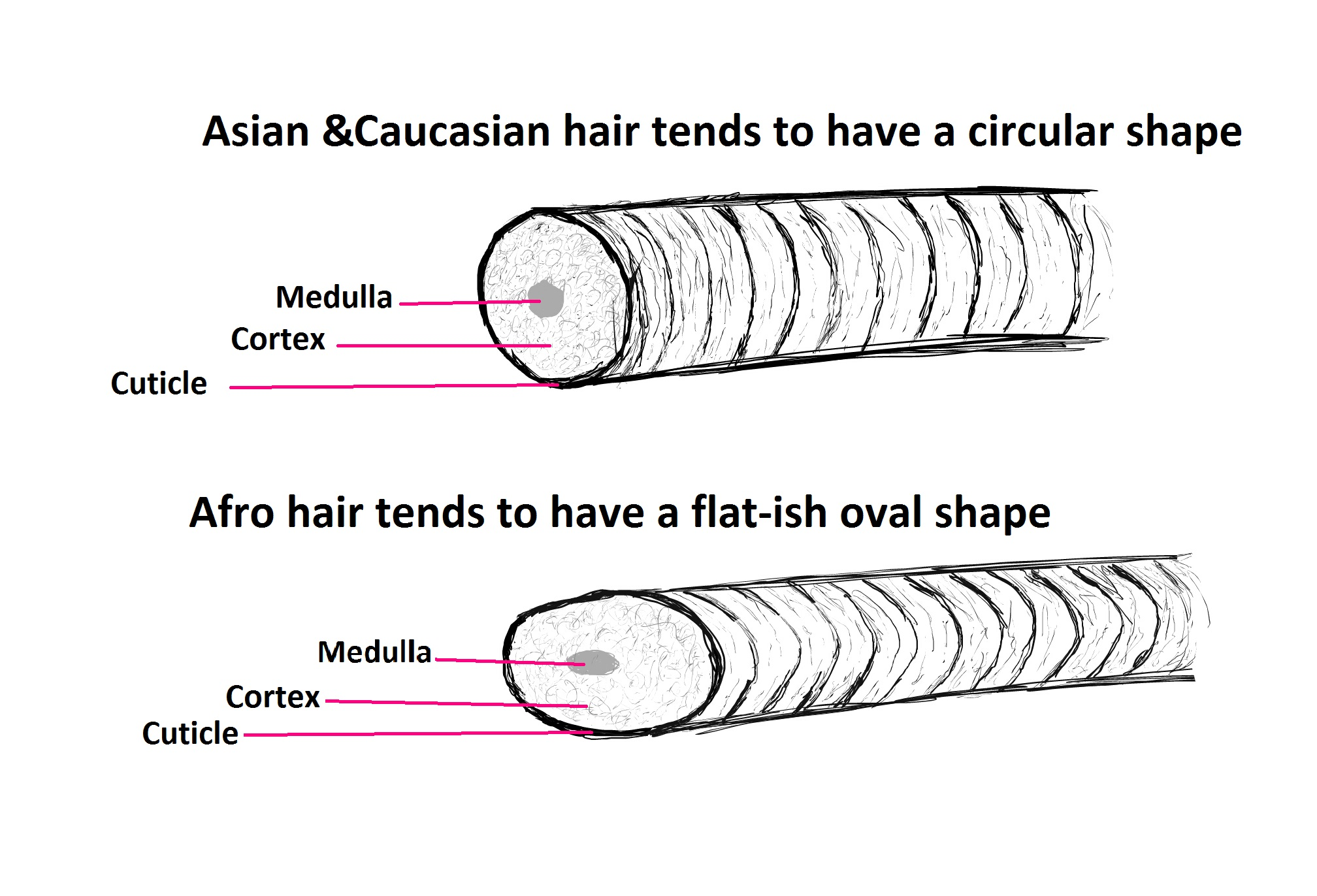 What Is It About Our Hair Diffrences Between Afro Asian And Caucasian Hair Rehairducation