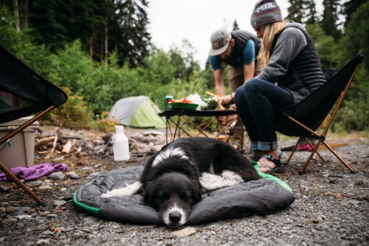 a dog hanging out at a campsite