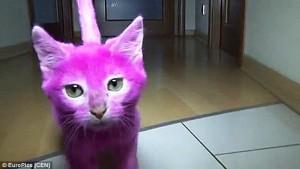 Kucing Mati Keracunan Setelah Dicat Pink Untuk Pesta