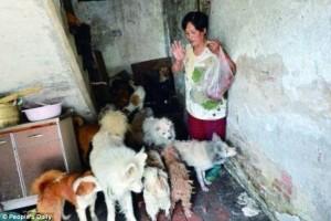 Wanita Ini Selamatkan Ratusan Anjing Dan Kucing Dari Festival Yulin