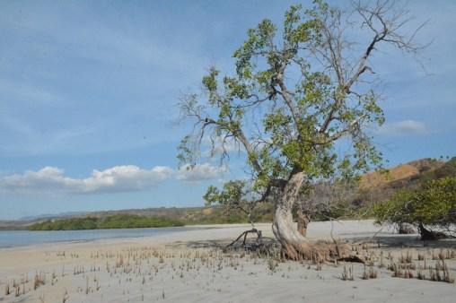 Indah Dan Unik Pantai Pasir Putih Ape Matan Di Adonara, Flores Timur