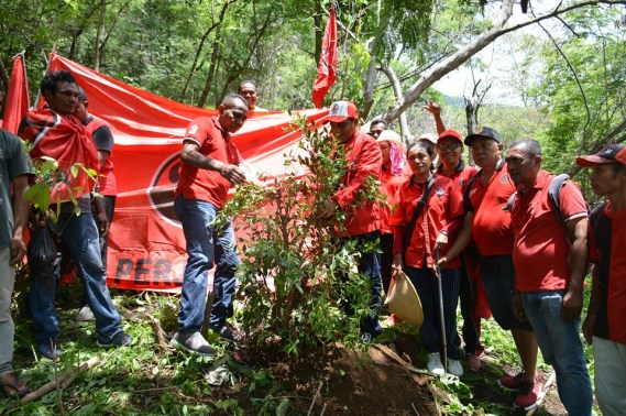 """Cinta Bumi"" DPC PDIP Flotim Tanam 1000 Anakan Pohon Di Kawasan Hutan Gunung Mandiri"