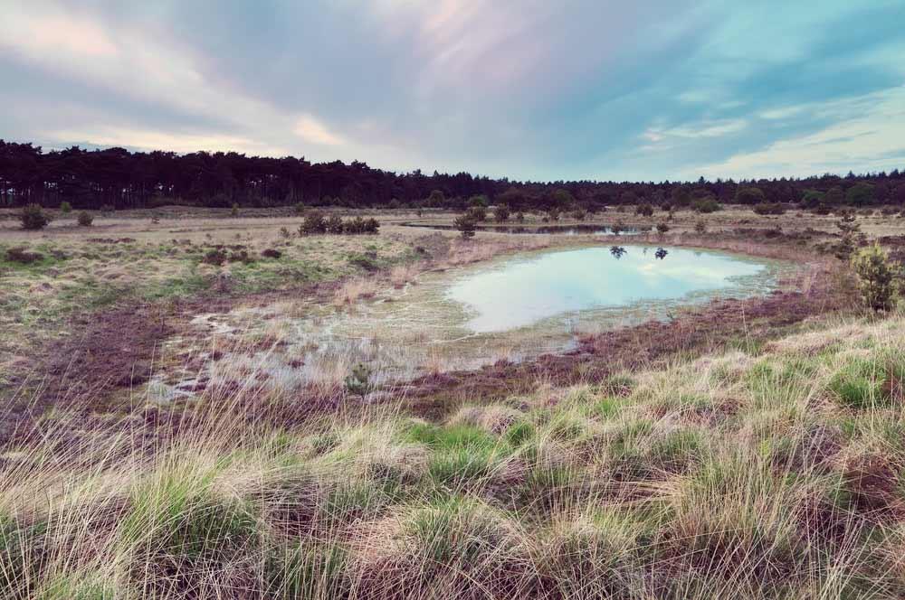 Single Reis Loonse en Drunense duinen 4-d. Pasen & Hemelvaart