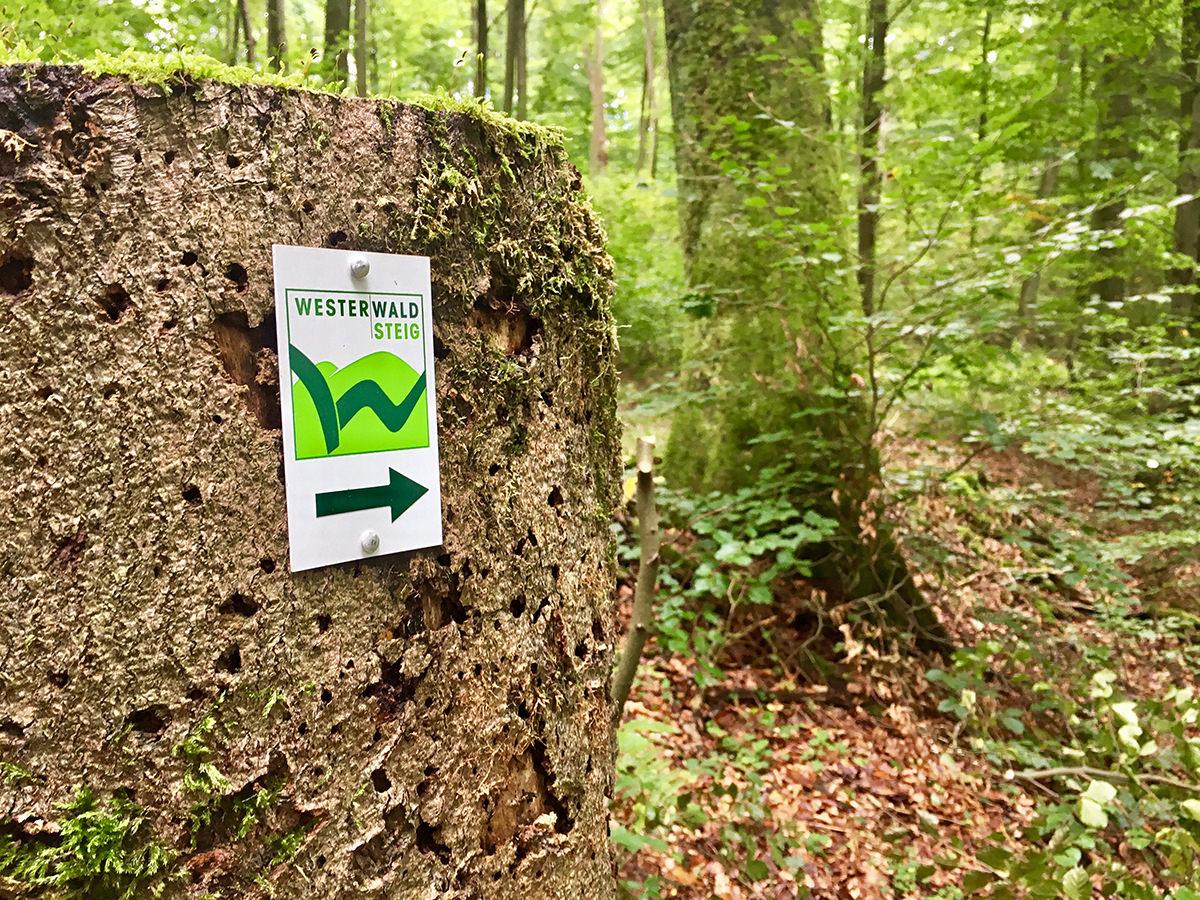 Wandelvakantie Wiedtal Westerwald standplaats 4 dagen