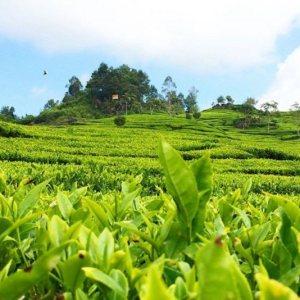 Best Deal Java en Bali