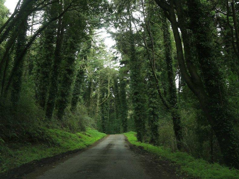 Roadtrip in den Märchenwald