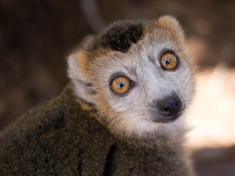 Lemuren, Lemuren!