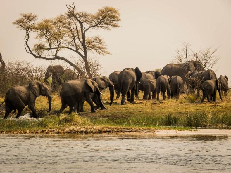 Musik am Okavango