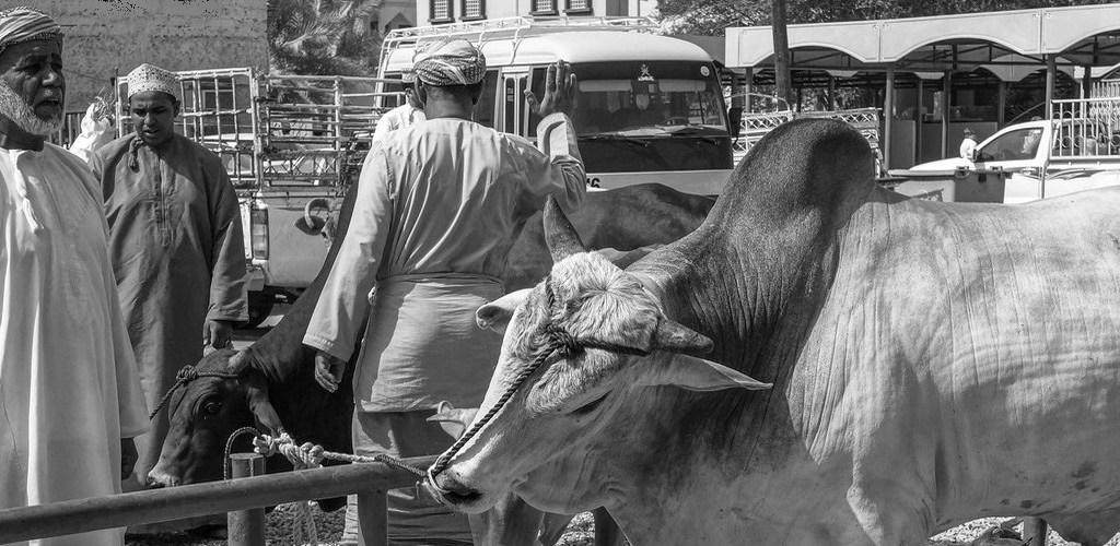 Viehmarkt Nizwa