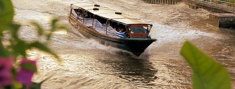 Ertrinkende Kanalkatze in Bangkok