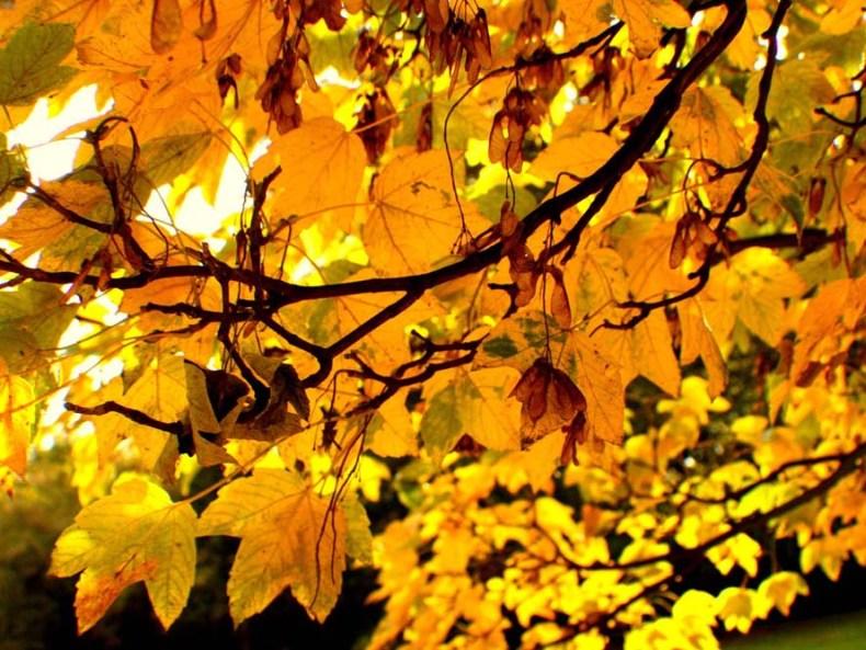 Im Herbst vor neuen Reisen