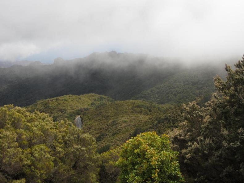 Regen im Nebelwald