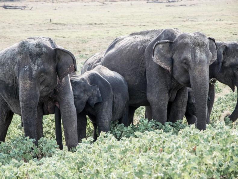 Im Elefanten Wonderland