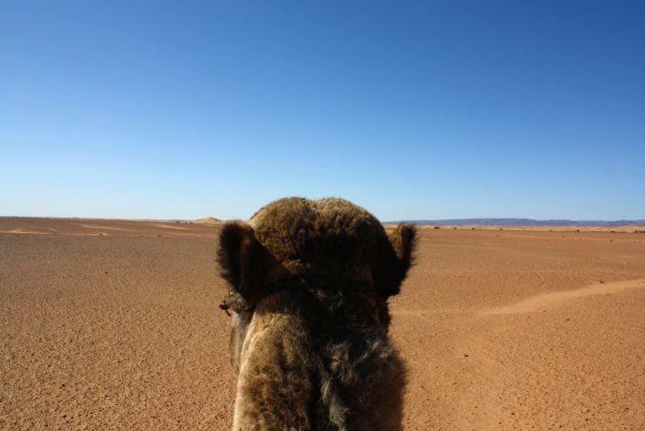 Durch die Wüste – Teil I
