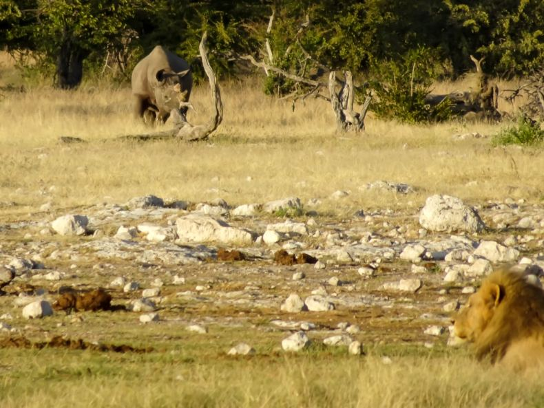 Von Swakopmund zu den wilden Tieren