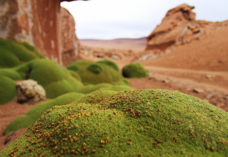 18 – desierto siloli_südbolivien (1024×683)