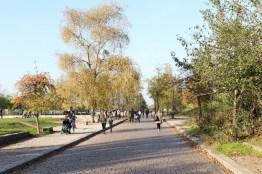 Sonnenbaden in Berlin Mauerpark, Berlin Prenzlauer Berg