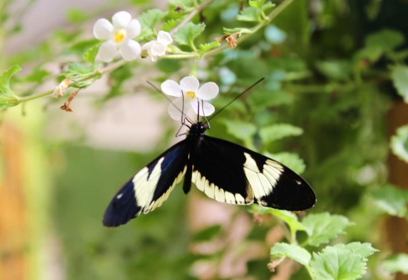 45 – mariposa farm_mindo_ecuador (1024×683)