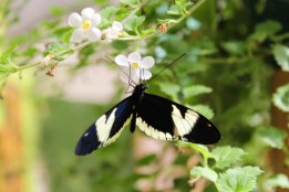 45 - mariposa farm_mindo_ecuador (1024x683)